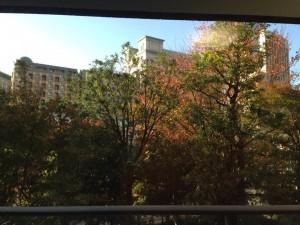 汐留サロンも秋の景色