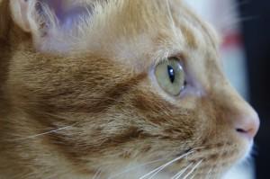 cat_cuteness